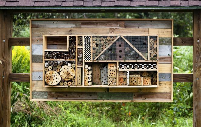 Ilustracja do informacji: Zadbaj o ekologię i zbuduj z nami domek dla pszczół murarek