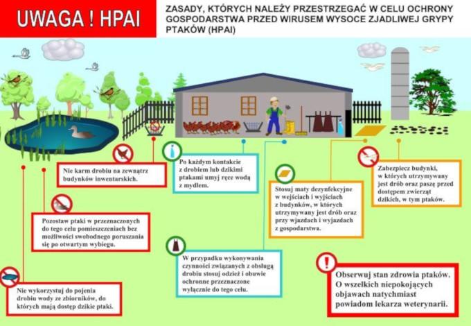 Ilustracja do informacji: Komunikat dot. wysoce zjadliwej ptasiej grypy